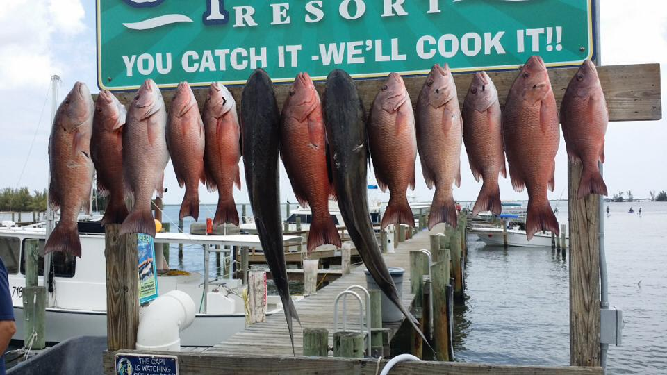 Snappers and Cobia