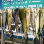 Fish hanging up after fishing